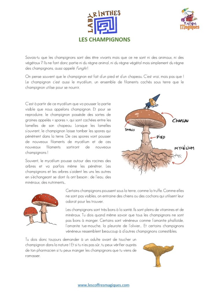 labyrinthe son ON - champignons 4-6 ans-1_1
