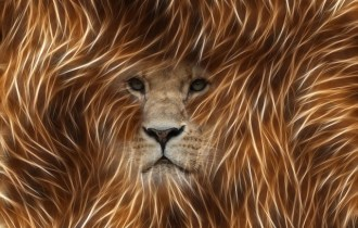Lion - Photoshop