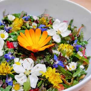cuisine crue plantes sauvages