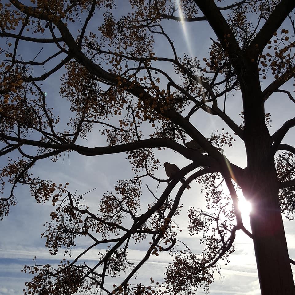Oiseaux sur la branche. comme un matin d'hiver