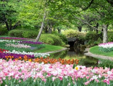 Les onze fleurs à bulbes à planter en automne