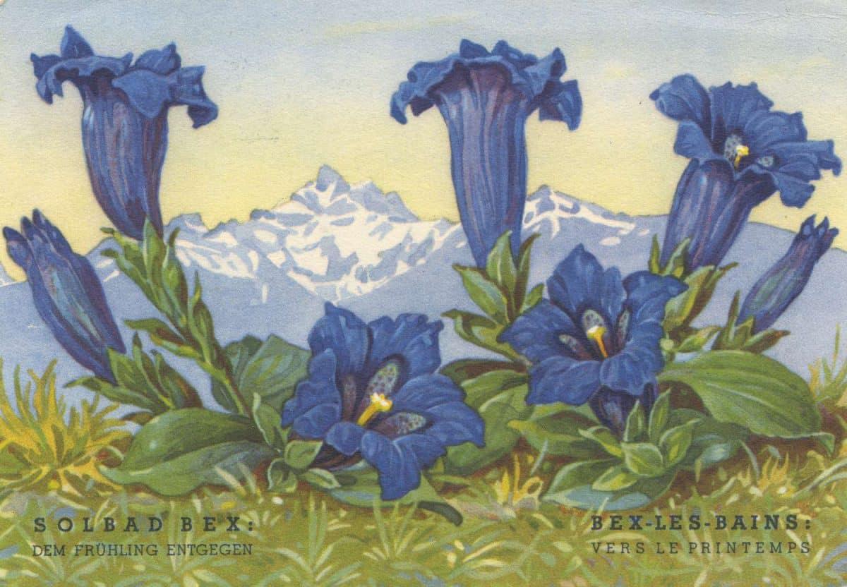 Carte postale, Bex-les-Bains: vers le printemps