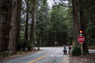 Sur une route entre les redwoods avec JB