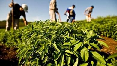 Photo de Agadir : Comment booster le secteur agricole ?