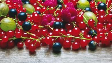 Photo de Kénitra. Le festival des fruits rouges bat son plein