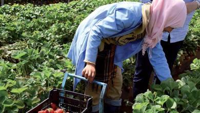Photo de Milieu rural : Promotion de l'emploi des jeunes