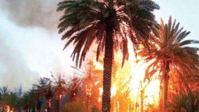 Photo de Plus de 800 palmiers ravagés par le feu à Guelmim