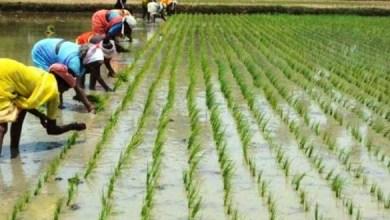 Photo de Examen des moyens de coopération agricole entre le Maroc et la RDC