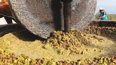 Photo de Une unité de valorisation agronomique des margines bientôt à Béni-Mellal