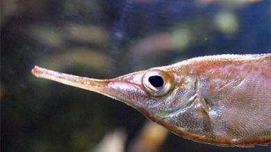 Photo de Menace sur la sardine et le maquereau