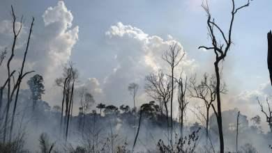 Photo de Une progression inquiétante des incendies en Amazonie