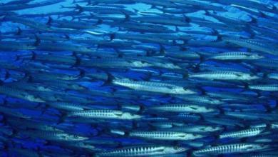 Photo de Rapport de l'UICN : Les océans en manque d'oxygène
