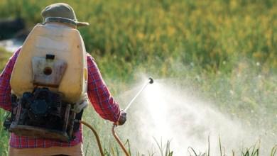 Photo de Registre phytosanitaire. Les distributeurs de pesticides encore loin de la conformité