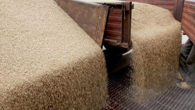 Photo de Céréales et légumineuses: l'ONICL annule l'AMI