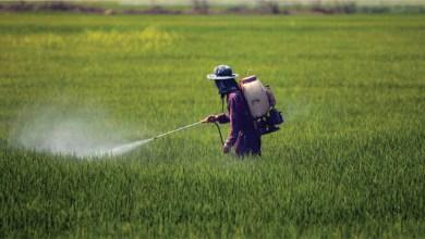 Photo de Pesticides : l'ONSSA retire cinq matières actives du marché