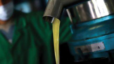 Photo de Culture de l'olivier : le Maroc cherche à se positionner en Méditerranée