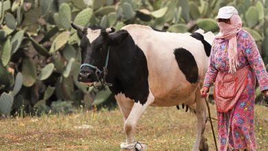 Photo de DOSSIER. Agriculture, forêt et élevage : un concept économique en évolution