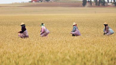 Photo de Fès-Meknès : bilan positif de la campagne agricole 2020-2021