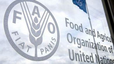 Photo de Aides alimentaires : 45 pays dans le besoin, selon la FAO