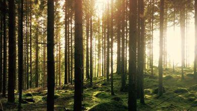 Photo de Journée internationale des forêts : la restauration des écosystèmes, la grande priorité de 2021