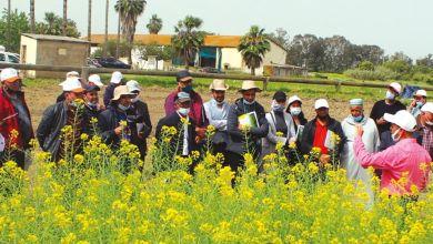 Photo de Moulay Yaacoub : l'INRA expose les nouvelles variétés de céréales