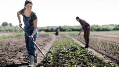 Photo de Marrakech-Safi. Agriculture : un secteur hautement stratégique