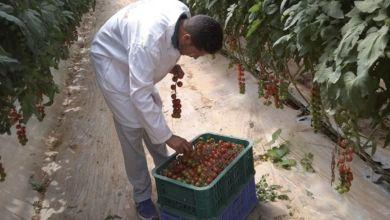 Photo de Agrégation agricole : l'ADA fixe les seuils de subvention