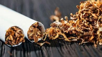 Photo de Global Forum on Nicotine : appel à des alternatives plus sûres et accessibles