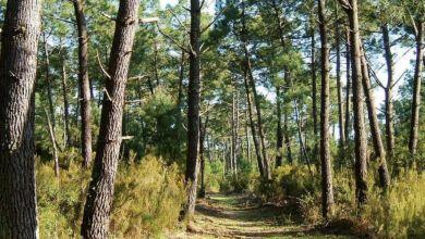 Photo de Eaux et Forêts : l'agence nationale bientôt opérationnelle