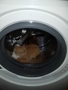 Le chat a trouvé une nouvelle cachette