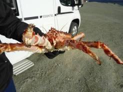 crabe0007