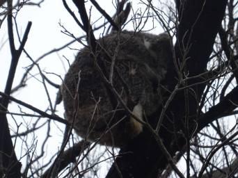 koalas0011