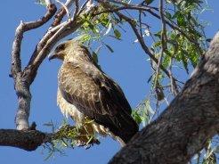outback queensland00092026228476395137527..jpg