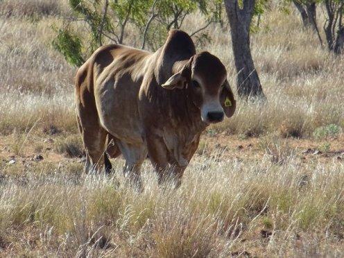 outback queensland00113688867869539064007..jpg