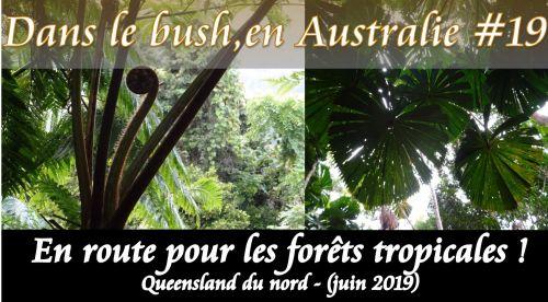 Queensland tropical