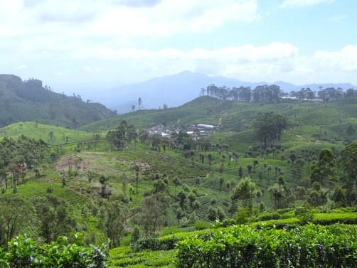 quoi faire au sri lanka pour visiter les plantations de thé