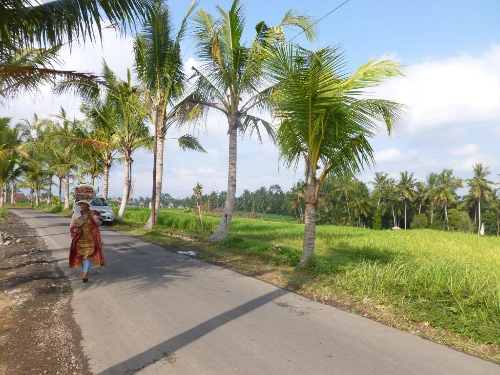 les paysages à ubud