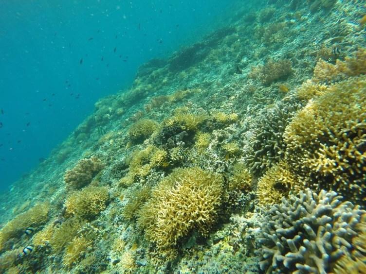 snorkelling dans les îles gili