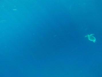 snorkelling avec une tortue sur gili air