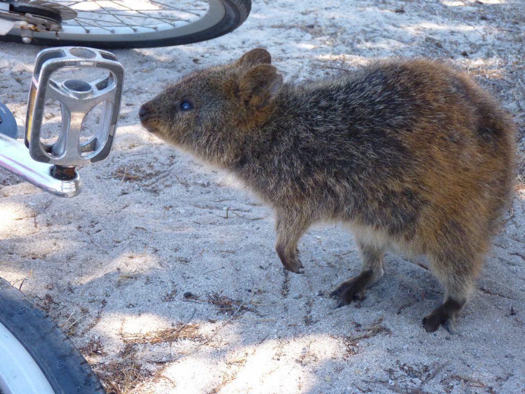 les-exploratrices-australie-2013-perth-animal