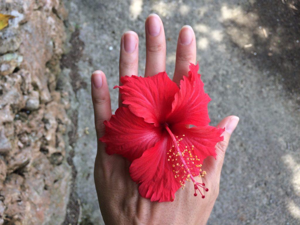 les-exploratrices-ishigaki-fleur-hibiscus