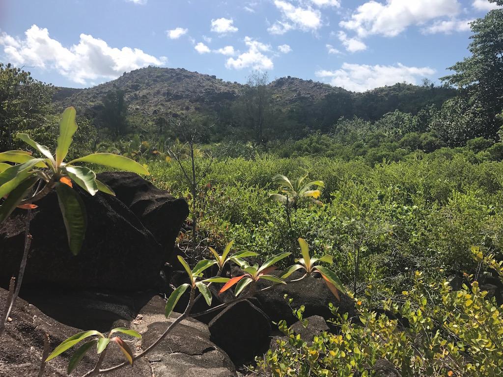 les-seychelles-curieuse-island-les-exploratrices