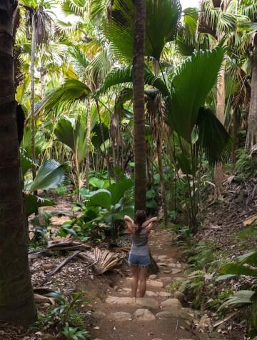 les-seychelles-praslin-vallee-de-mai