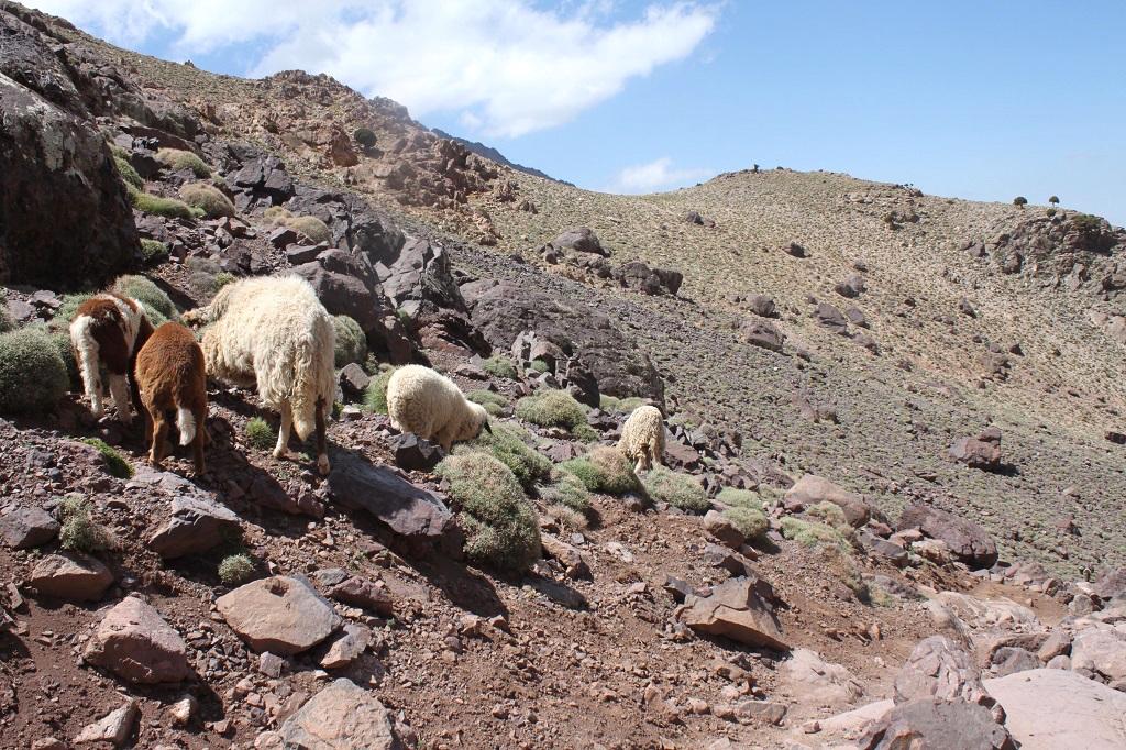 maroc-toubkal-lily-les-exploratrices-paysage-montagne