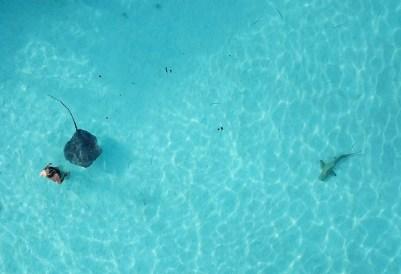 nager avec les raies à Moorea