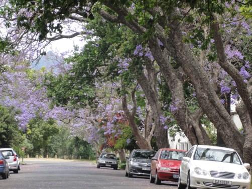 Stellenbosch-rues-fleurs