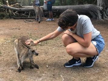 australie-sydney-morisset-park-fanny-caresse-kangourou