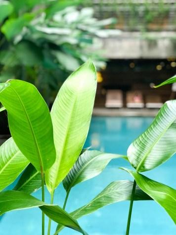 indonesie-greenhost-boutique-hotel-yogyakarta-piscine-detail