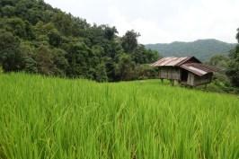 thailande-doi-inthanon-rizieres-trek