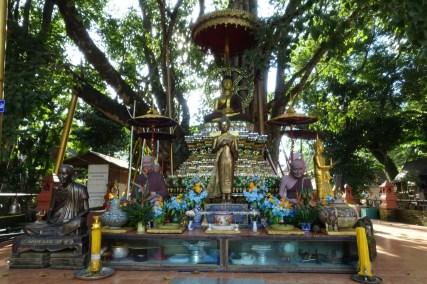 thailande-du-nord-Wat-Chedi-Ched-Yod-bodi-tree